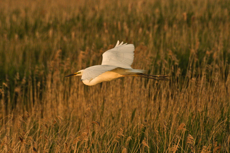 egret-picture