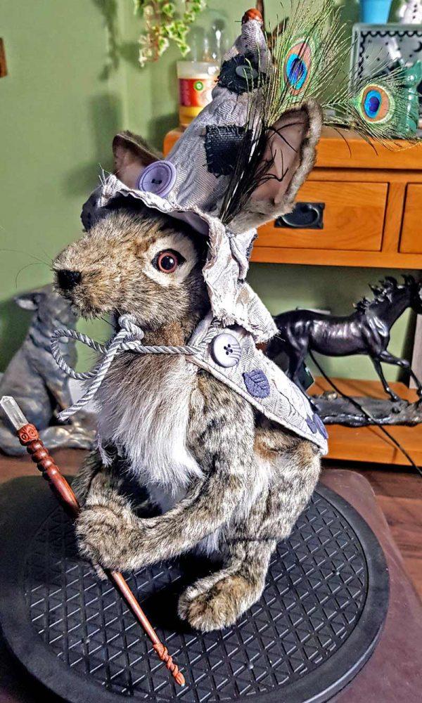 hyssop-hare1